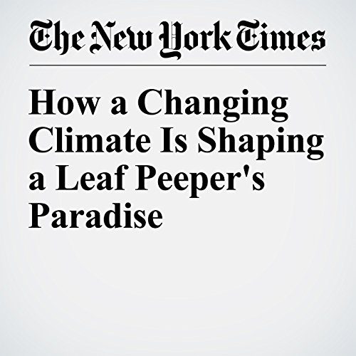 How a Changing Climate Is Shaping a Leaf Peeper's Paradise audiobook cover art