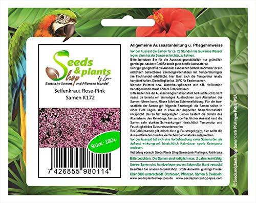 Pezzi - 180x Seifenkraut Rose-Pink-Saponaria Seme Pianta Giardino Semi K172 - Seeds Plants Shop Samenbank Pfullingen Patrik Ipsa