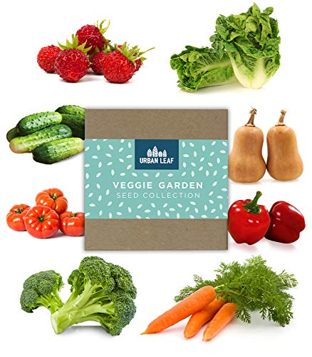 Vegetable Seed Variety Pack for Planting on Your Patio or Urban Garden - Tomato, Bell Pepper, Lettuce, Squash, Cucumber, Carrot, Strawberry and Broccoli