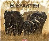 Elefanten - Kalender 2021