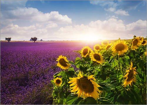 Posterlounge Acrylglasbild 90 x 70 cm: Lavendel und Sonnenblumenfelder, Provence von Elena Schweitzer - Wandbild, Acryl Glasbild, Druck auf Acryl Glas Bild