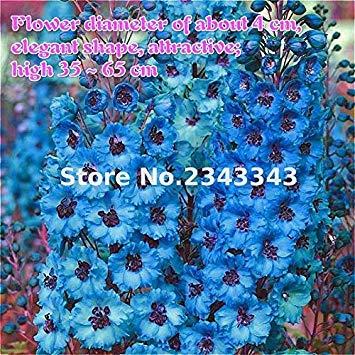 Vistaric 100 Pcs/sac Delphinium Graines Nouveau Mélange Emballage Fleur Graines Géant Consolida Ajacis Graine Jardin Fleurs Plantes Bonsaï Arbre Semillas Multicolore