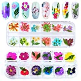 Kalolary 24 Colors 3D Dried Flowers for Nail Art, Colorful Real Flowers