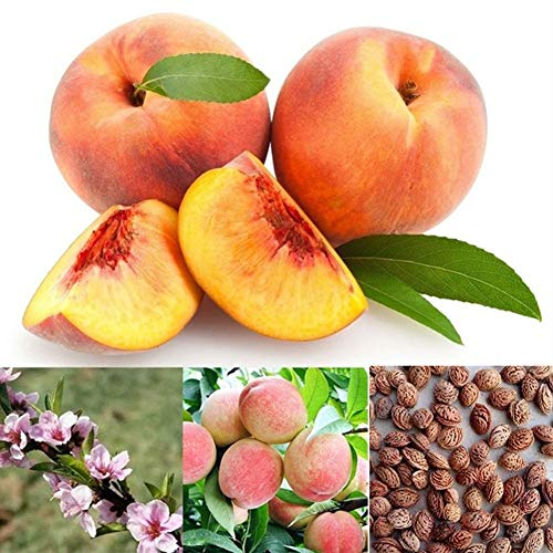 Dyllutrwhe Vegetables Seeds 50Pcs Seeds Juicy Delicious Fruit Tree Garden Yard Bonsai Plant Peach Seeds