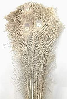 American Feathers Eyed Peacock Tail Feathers 30-35  Dyed - per 25  Bleached Tan