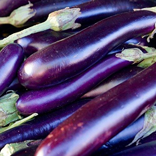 David's Garden Seeds Eggplant Long Purple SAL1131 (Purple) 50 Non-GMO, Heirloom Seeds