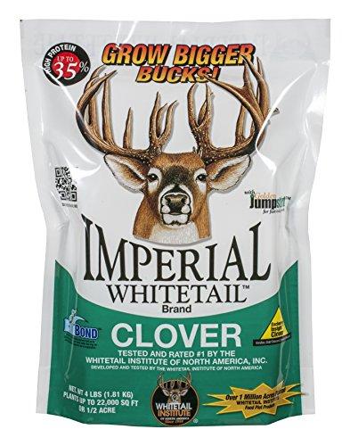 10 best clover seed bulk for 2020