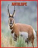Antilope: Immagini bellissime e fatti interessanti Libro per bambini sui Antilope
