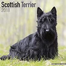 Scottish Terrier Calendar - Dog Breed Calendars - 2017 - 2018 wall Calendars - 16 Month by Avonside