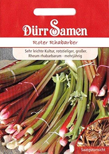 Rhabarber, roter, Rheum rhabarbarum, ca. 50 Samen