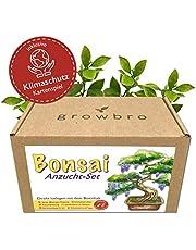 Bonsai - Growbro - Wisteria kweekset incl. klimaatkaarten, kweek je eigen bonsai-bro, geschenken voor vrouwen en mannen, bonsai-starterkit incl. zaden, spuitfles, enz.