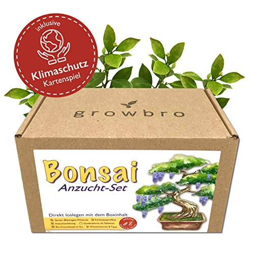 Bonsai – growbro - Wisteria Anzuchtset inkl. Klima-Karten, Züchte deinen eigenen Bonsai-Bro, Geschenke für Frauen und Männer, Bonsai Starter Kit inkl. Samen, Sprühflasche, uvm.