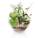 Grande vaso di vetro per piante da terrario, 17,8 x 17,8 cm, grande apertura in vetro, mini ciotola per pesci per decorazione da giardino