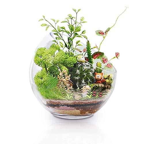 Grote glazen Terrarium Luchtplant Glazen Houders, 7
