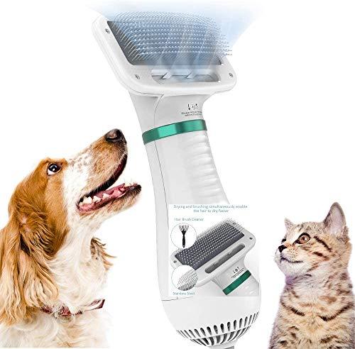 classifica asciugacapelli per cani