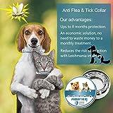 IMG-2 collare antipulci per cani e