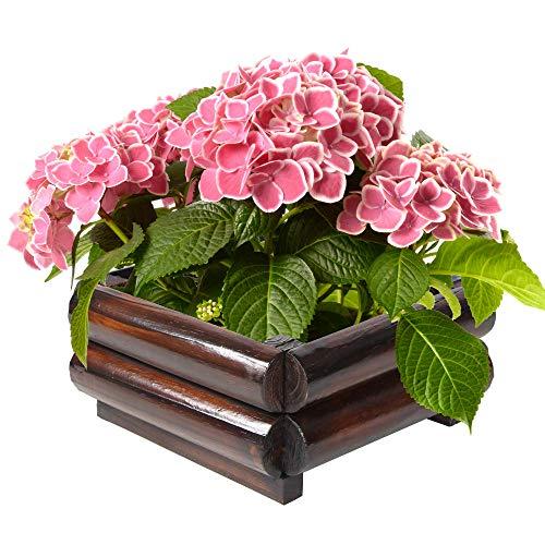 BALYWOOD Rimiking Wooden Plant Pot Light Edge Square Shape Garden Flower Package Resistant Carbonization (Large)