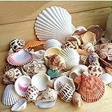 Ardisle - Conchas de Playa Mixtas Naturales para decoración de Mesa de Acuario o Boda