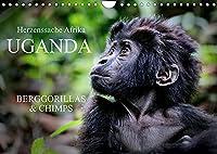 UGANDA - Berggorillas & Chimps (Wandkalender 2022 DIN A4 quer): Zerbrechliche Wesen - Afrikas Menschenaffen (Monatskalender, 14 Seiten )