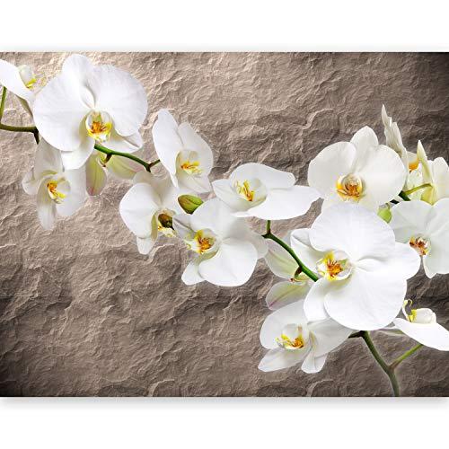 murando Fototapete Blumen Orchidee 400x270 cm Vlies Tapeten Wandtapete XXL Moderne Wanddeko Design Wand Dekoration Wohnzimmer Schlafzimmer Büro Flur Steine 10080906-15