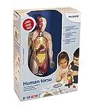 Miniland- Juego profesional de torso humano (99113)
