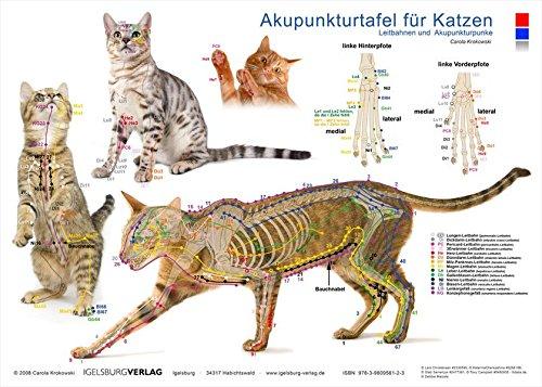 Tierakupunktur Akupunktur für Katzen (Akupunkturtafel): Leitbahnen und Akupunkturpunkte