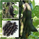 New!!!! Seeds Mucuna pruriens 10 Seeds,Velvet bean,Unique Rare From Thailand+