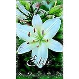 Bulbo Lilium asiatic blanco 2 unidades