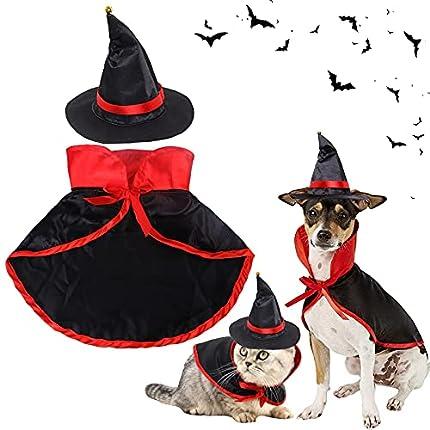Royal Canin - Juego de iniciación de carne de gatito con cuenco y manta para gatito con túnel de juego, guía para gatitos y alfombrilla para rascar comida favorita para gatitos