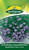 Australisches Gänseblümchen, Blausternchen