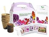 [page_title]-Geschenk Anzuchtset: Blütenzauber 5 Kontinente Box - zum Selberzüchten oder zum Verschenken - eine originelle Geschenkidee für praktisch jeden Anlass