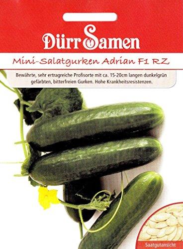 Mini Gurke Adrian, hohe Kranheitsresistenzen, ca. 6 Samen
