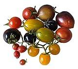 Semillas mixtas de tomate cherry - Lycopersicon esculentum
