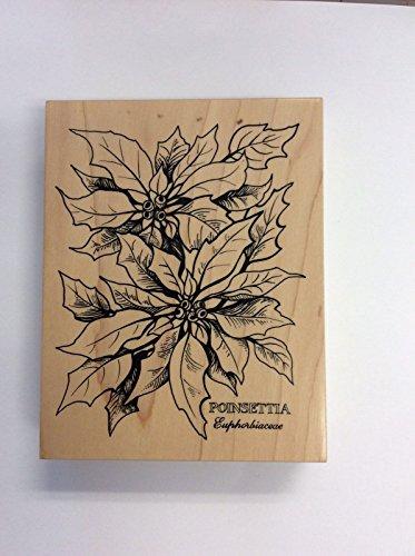 PSX Rubber Stamp Large Poinsettia Botanical # K-784 1992 Wood Mounted