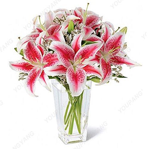 100 pcs Bonsai Lily Graines d'intérieur Plantes vivaces Lily Flower Seed Pure White Accueil Jardin Fleurs Plantes SEMENTES Livraison gratuite vert