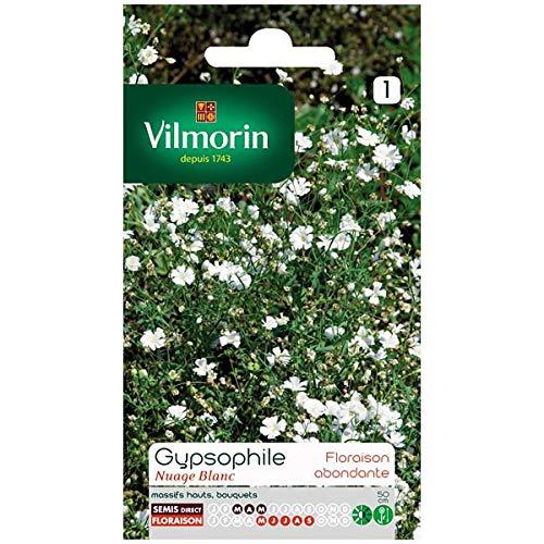Vilmorin - Sachet graines Gypsophile nuage blanc