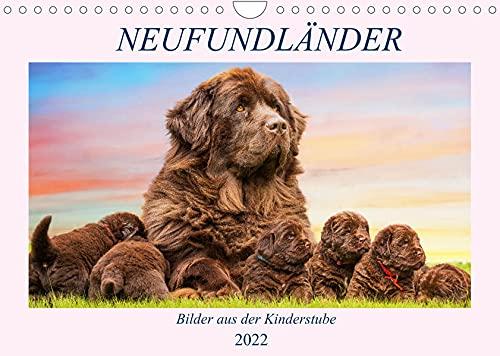 Neufundländer - Bilder aus der Kinderstube (Wandkalender 2022 DIN A4 quer): Lassen Sie sich von entzückenden 3-7 Wochen alten Neufundländer - Welpen ... (Monatskalender, 14 Seiten ) (CALVENDO Tiere)