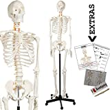"Axis Scientific Human Skeleton Model Anatomy Bundle, 5' 6"" Life Size Skeletal System, 206 Bones, Interactive Medical Replica 3 Year Warranty, Study Guide, Adjustable Rolling Stand, and Dust Cover"