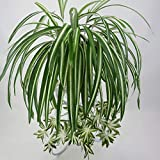 GWOKWAI 2Pcs Artificial Chlorophytum, 25.5in Faux Plant Hanging Basket Simulation Ivy Green Leaves Fake Wall Hanging Plants for Home Garden Office Verandah Wedding Decoration