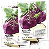 Seed Needs, Purple Vienna Kohlrabi (Brassica oleracea) Twin Pack of 500 Seeds Each Non-GMO