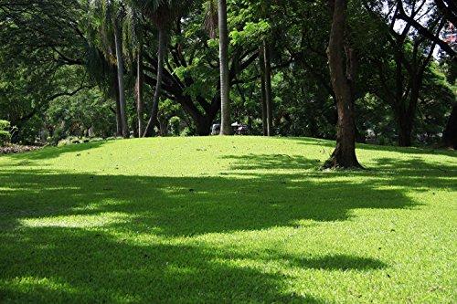 Rasetta Rasensaat - Schattenrasen - 2,5kg für bis zu 75m²