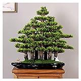 Árbol de bonsái Falso Simulación Creativa Bienvenido Pino Bonsai Sala de Estar China En Maceta Grandes Plantas Verdes Gabinete de TV de Interior Decoración de Paisaje Reg