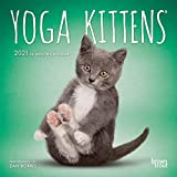 Yoga Kittens OFFICIAL 2021 7 x 7 Inch Monthly Mini Wall Calendar, Animals Humor Kitten