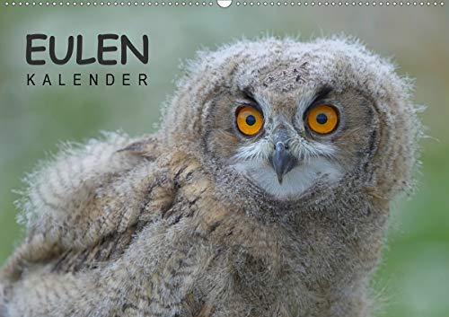 Eulen-Kalender (Wandkalender 2021 DIN A2 quer)