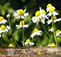 1,500 GERMAN CHAMOMILE Seed - FLOWER HERB SEEDS - CAMOMILE TEA - HEAVENLY APPLE SCENT - Sweet Smelling & Aromatic Daisy Like Flowers - 60 - 65 Days To Harvest - By MySeeds.Co