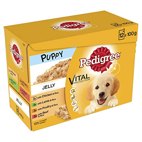 Pedigree Junior Wet Dog Food for Young Dogs and Puppies 2-12 Months Mixed Selection in Jelly, 12 x 100g