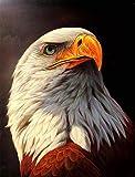 Diy Digital Pintura Por Número Para Adulto Negro Blanco Calvo Águila Animal Artes Artesanía Para Casa Decoración De Pared 40*50cm