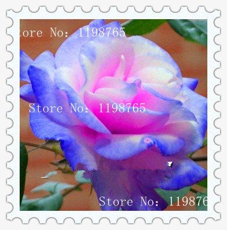 9 types mélangés 100 rose semences / paquet, Quatre Saisons semer les graines de fleurs vivaces, fleurs rose graines faciles à planter