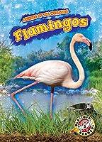 Flamingos (Animals of the Wetlands: Blastoff! Readers, Level 2)