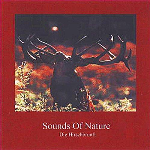 Sounds Of Nature - Die Hirschbrunft Titelbild